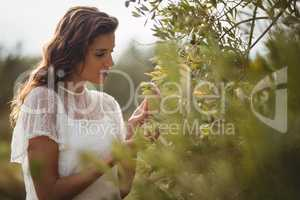 Beautiful young woman holding olive tree at farm