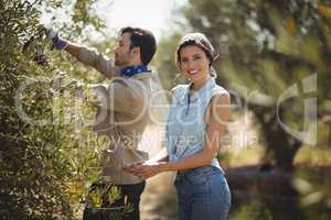 Smiling girlfriend with boyfriend plucking olives at farm