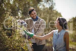 Cheerful couple looking at each other at olive farm