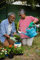 Senior couple planting in backyard
