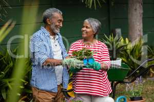 Smiling senior couple holding plant in backyard