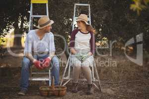 Couple talking while sitting on ladders at olive farm