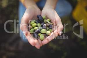 High angle view of woman holding olives
