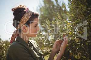 Woman holding olive tree at farm on sunny day