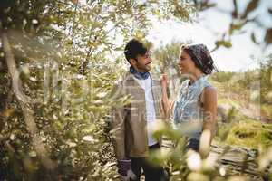 Young couple amidst trees on sunny day at olive farm