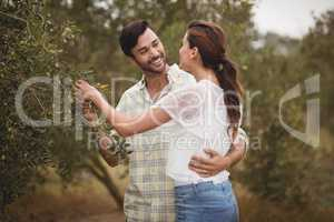 Young couple embracing by olive trees at farm