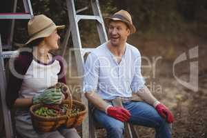 Young couple talking while sitting on ladders at olive farm