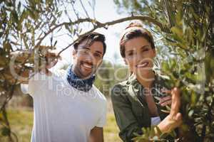 Portrait of smiling couple holding olive tree at farm