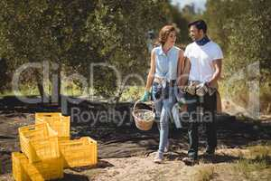 Happy couple carrying olives in basket at farm on sunny day