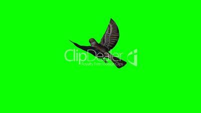 bird sparrow is flying 2