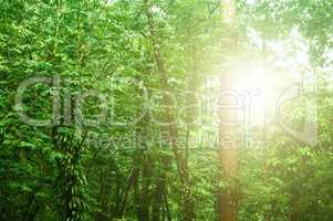 Beautiful tropical rainforest
