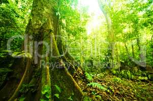 Fantastic tropical forest
