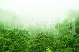 Rainforest in foggy morning