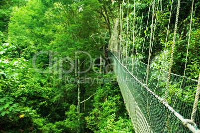 Canopy bridge Malaysia