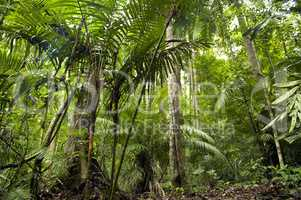 Tropical green forest landscape