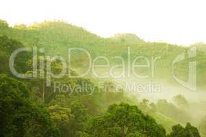 Green forest mountain in fog