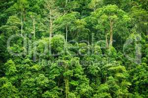 Tropical green forest landscape view