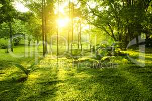 Tropical green forest sunrise