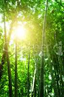 Bamboo forest view