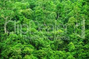 Tropical rainforest landscape view