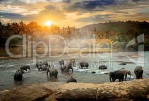 Wildlife in jungles