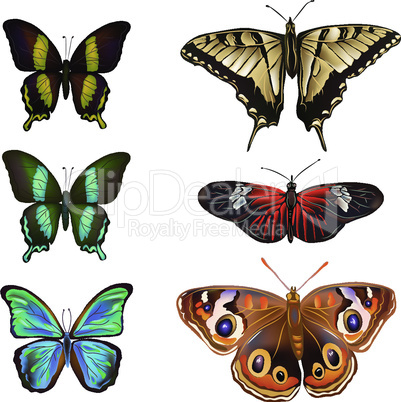 Collection of various kinds of butterflies, isolated on white background