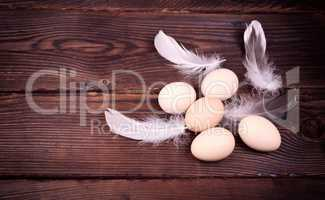 Five raw chicken eggs with feathers