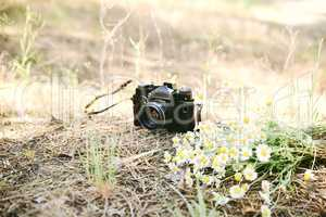 Film vintage camera and a bouquet of camomiles