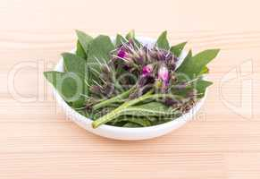 Bowl of Comfrey
