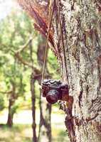 Old retro film camera hanging on a tree