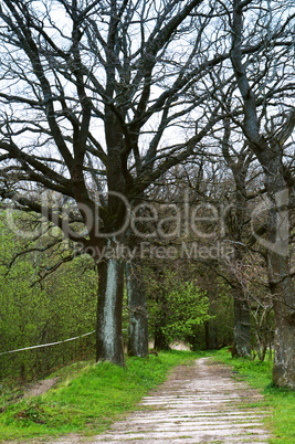 alley, trees, high, road, footpath, ancient, journey, uncharted