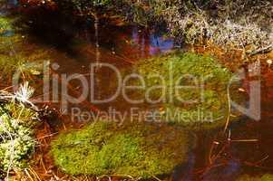 swamp, bog, marsh, mire, wetland, fen, morass, quagmire, slough, marshland