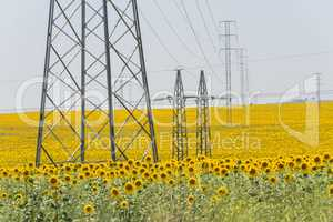 High voltage towers in sunflower field