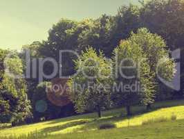 Natural landscape scene