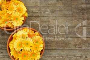 Blumentöpfe mit Blumen auf Holz Hintergrund