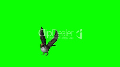 bird sparrow flying and landing - green screen 1