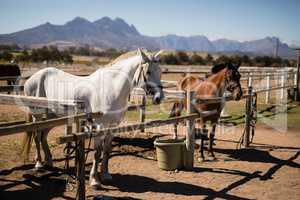 Horses standing the ranch