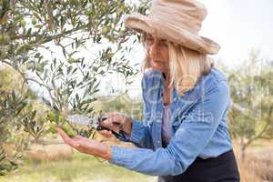 Woman pruning olive tree in farm