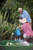 Senior couple gardening in yard