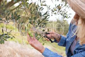 Close-up of woman pruning olive tree in farm