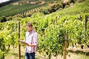 Man using phone and tablet at vineyard