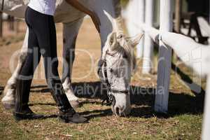 Girl caressing a white horse in the ranch