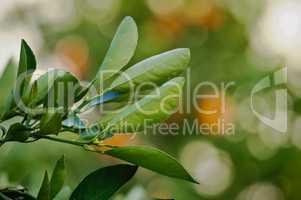orange leafs in blur