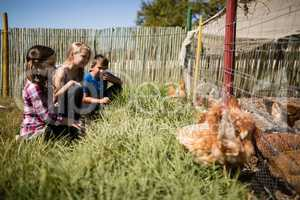 Kids looking at flock of hen grazing in the farm
