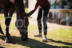 Woman caressing the horse