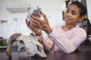 Happy elementary student examining animal skull by desk