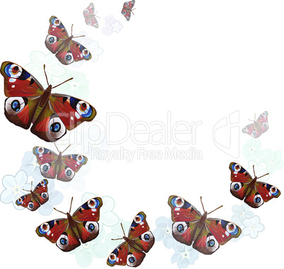 heart of butterflies on white background