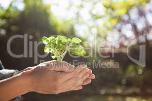 Cropped woman holding seedling in cupped hands