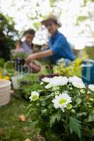 White flowering plants with mother and daughter in background