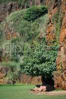 White rhinoceros lying in shade beneath cliff